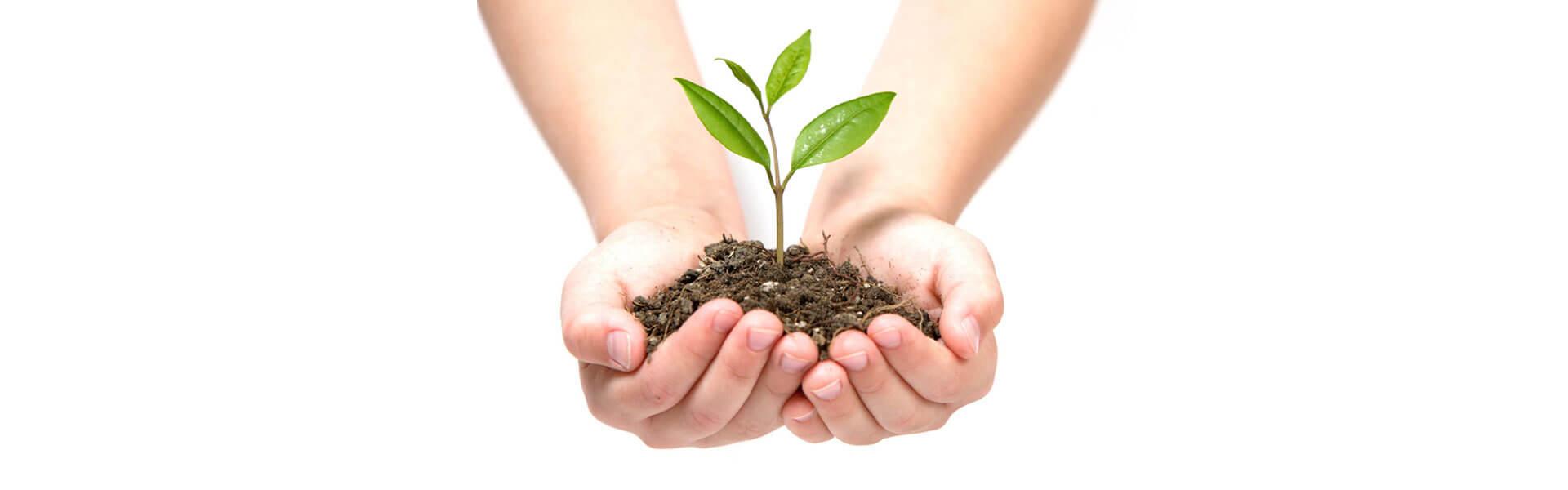 Due mani offrono un mucchietto di terra nel quale è piantato un germoglio